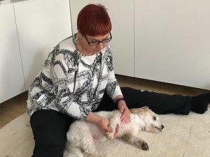 Koiran rentouttava hierontatuokio.