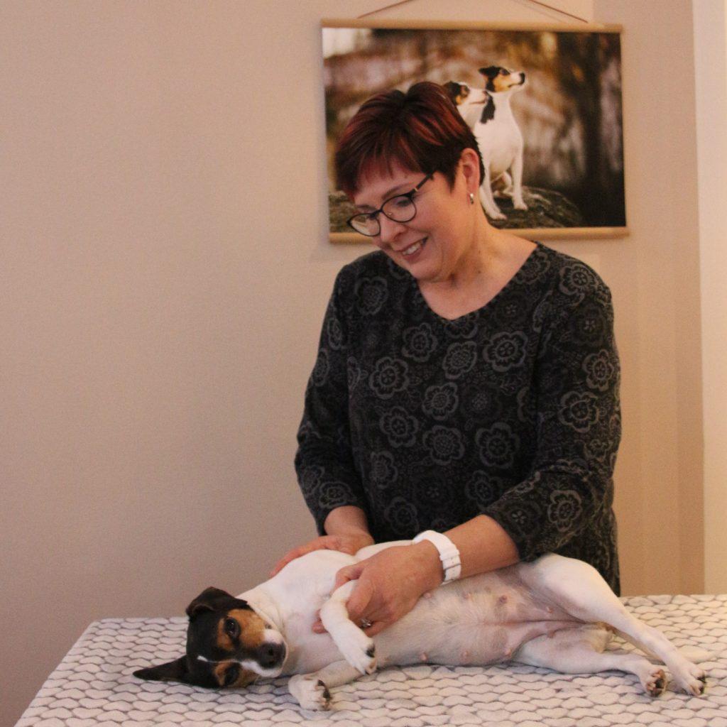 Manuaalinen koirahieronta on erinomainen vaivoja ennaltaehkäisevä hoitomuoto.