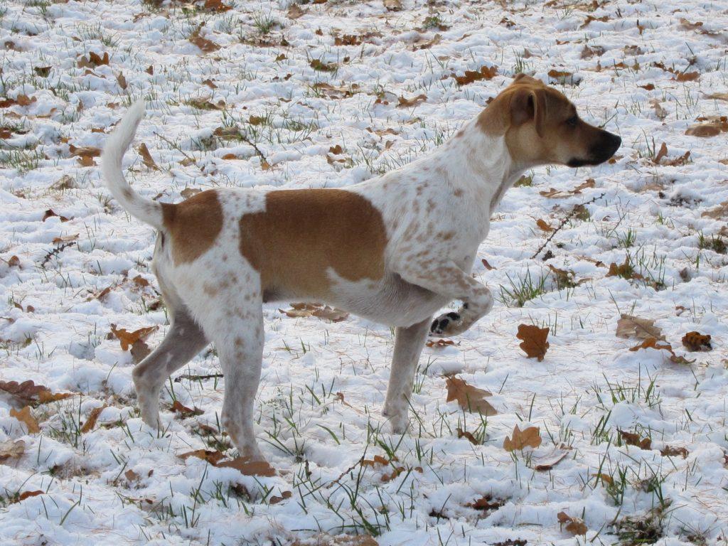 MinTassu tarjoaa myös koirien lenkitystä, hoitoapua ja kotihierontakursseja.